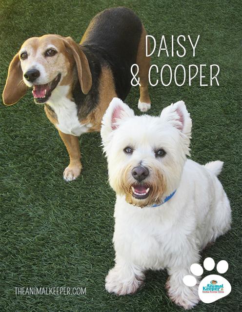 Ak3-Daisy-and-Cooper