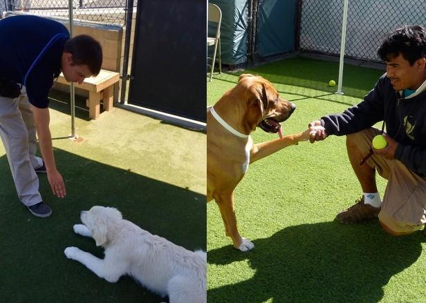 Mutt Manners Dog Training Reviews